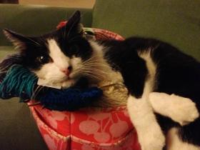 Kiko in yarn