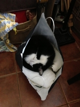 Kiko's new bed